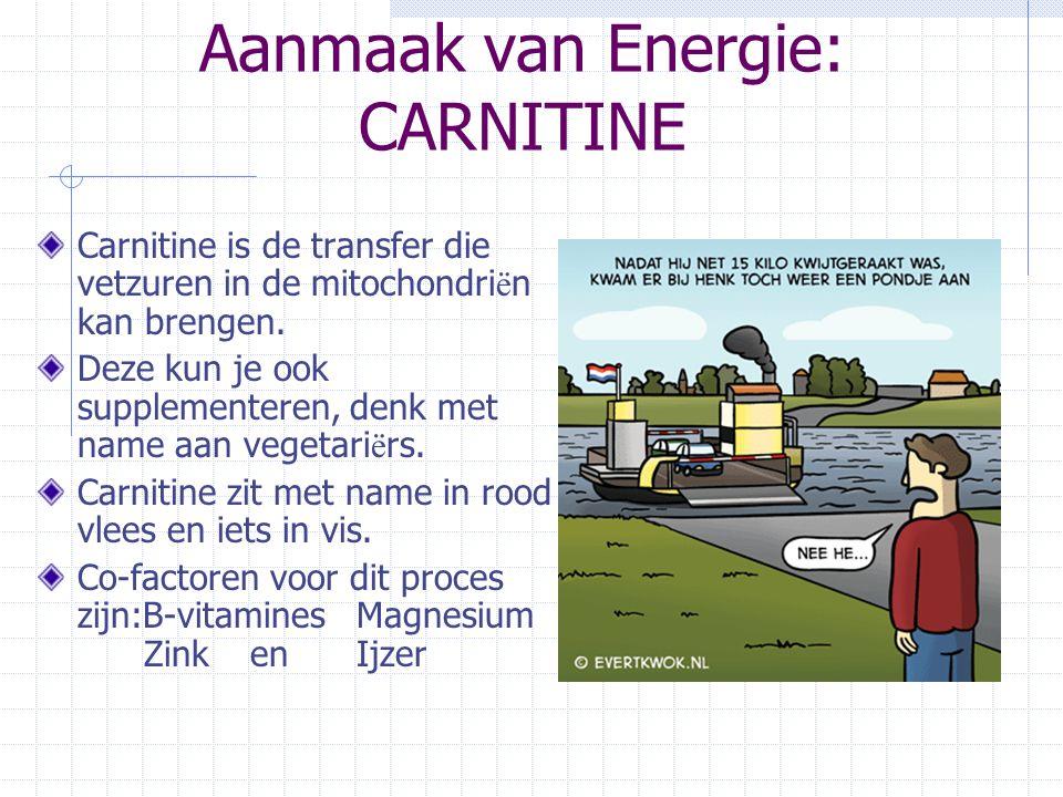 Aanmaak van Energie: CARNITINE Carnitine is de transfer die vetzuren in de mitochondri ë n kan brengen. Deze kun je ook supplementeren, denk met name