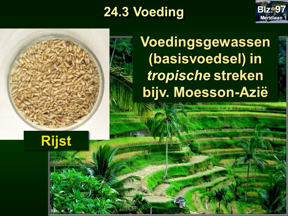 Voedingsgewassen (basisvoedsel) in tropische streken bijv. Moesson-Azië Voedingsgewassen (basisvoedsel) in tropische streken bijv. Moesson-Azië RijstR