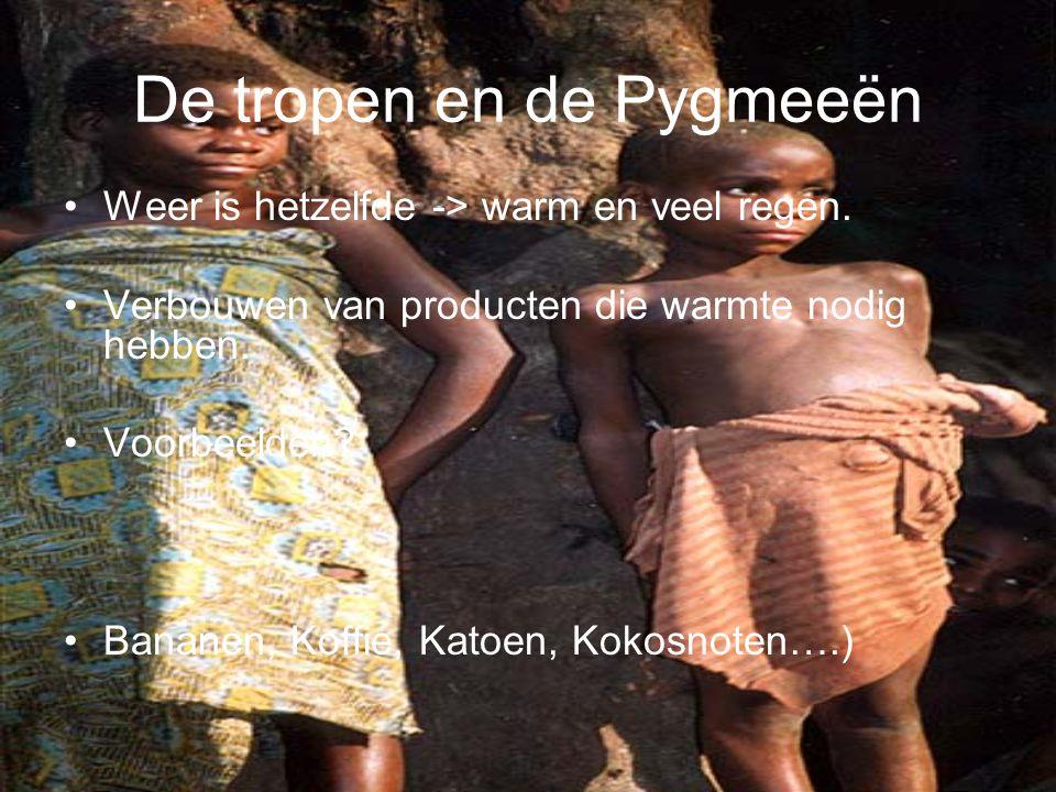 De tropen en de Pygmeeën •Weer is hetzelfde -> warm en veel regen. •Verbouwen van producten die warmte nodig hebben. •Voorbeelden? •Bananen, Koffie, K