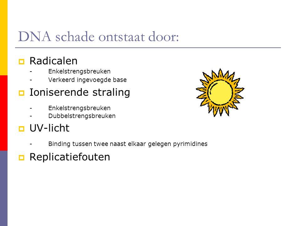 DNA schade ontstaat door:  Radicalen -Enkelstrengsbreuken -Verkeerd ingevoegde base  Ioniserende straling -Enkelstrengsbreuken -Dubbelstrengsbreuken