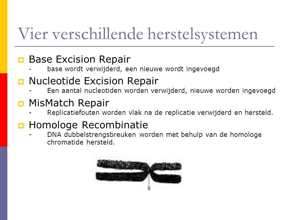 Vier verschillende herstelsystemen  Base Excision Repair - base wordt verwijderd, een nieuwe wordt ingevoegd  Nucleotide Excision Repair -Een aantal
