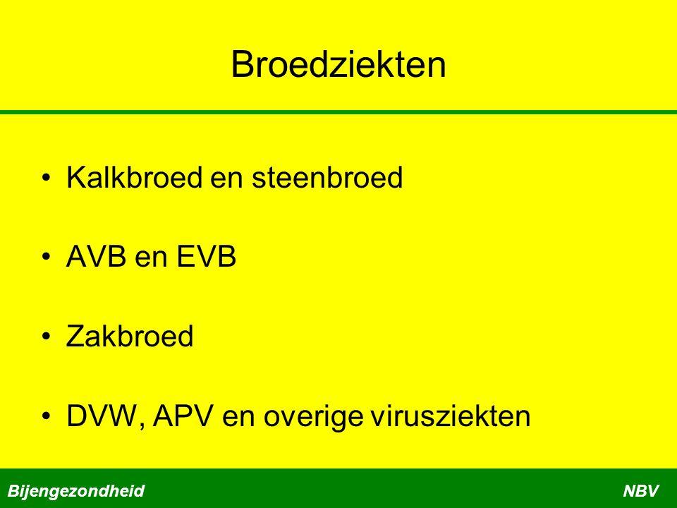 Broedziekten •Kalkbroed en steenbroed •AVB en EVB •Zakbroed •DVW, APV en overige virusziekten BijengezondheidNBV