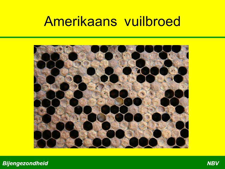 Amerikaans vuilbroed BijengezondheidNBV