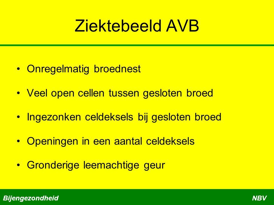 Ziektebeeld AVB •Onregelmatig broednest •Veel open cellen tussen gesloten broed •Ingezonken celdeksels bij gesloten broed •Openingen in een aantal cel
