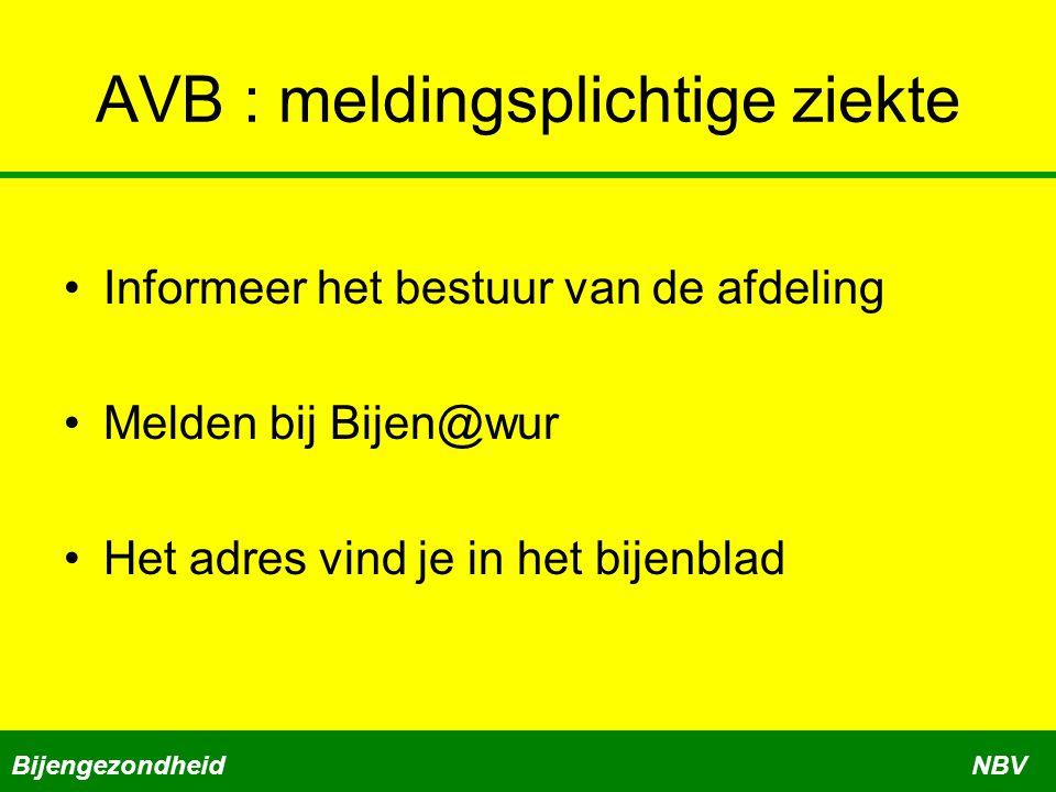 AVB : meldingsplichtige ziekte •Informeer het bestuur van de afdeling •Melden bij Bijen@wur •Het adres vind je in het bijenblad BijengezondheidNBV