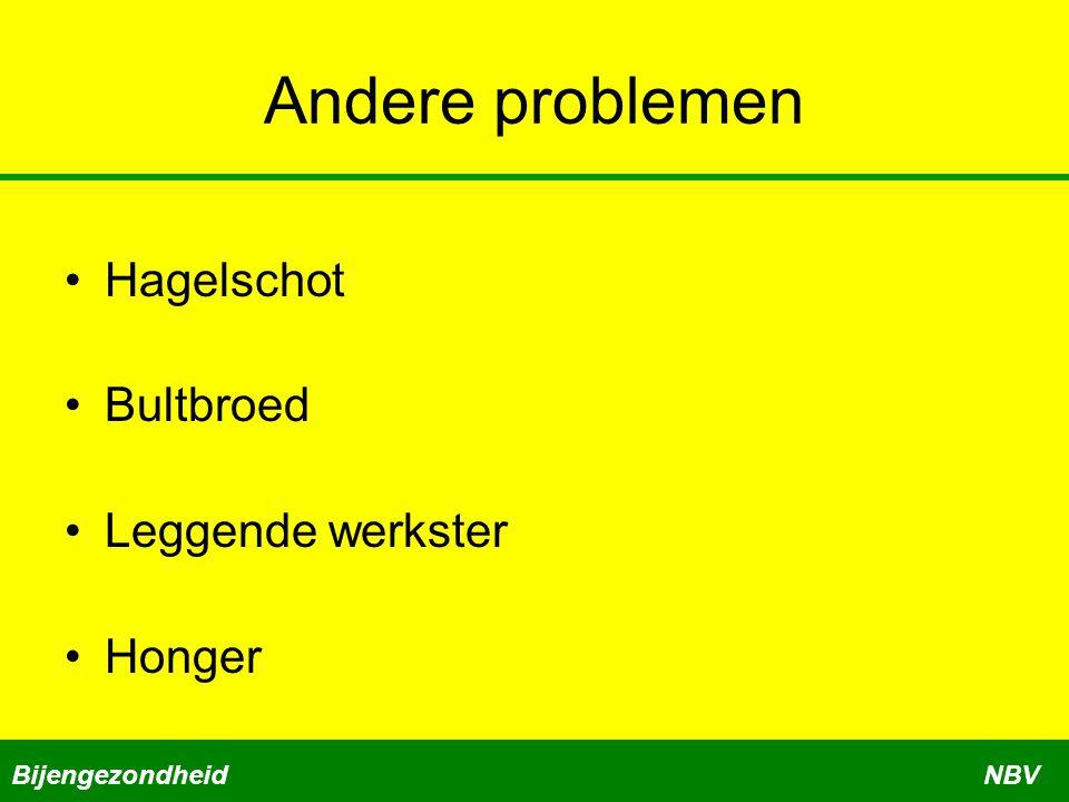 Andere problemen •Hagelschot •Bultbroed •Leggende werkster •Honger BijengezondheidNBV