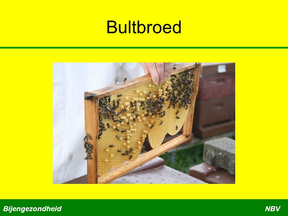 Bultbroed BijengezondheidNBV