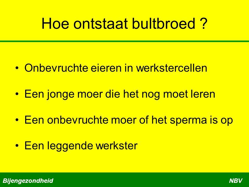 Hoe ontstaat bultbroed ? •Onbevruchte eieren in werkstercellen •Een jonge moer die het nog moet leren •Een onbevruchte moer of het sperma is op •Een l