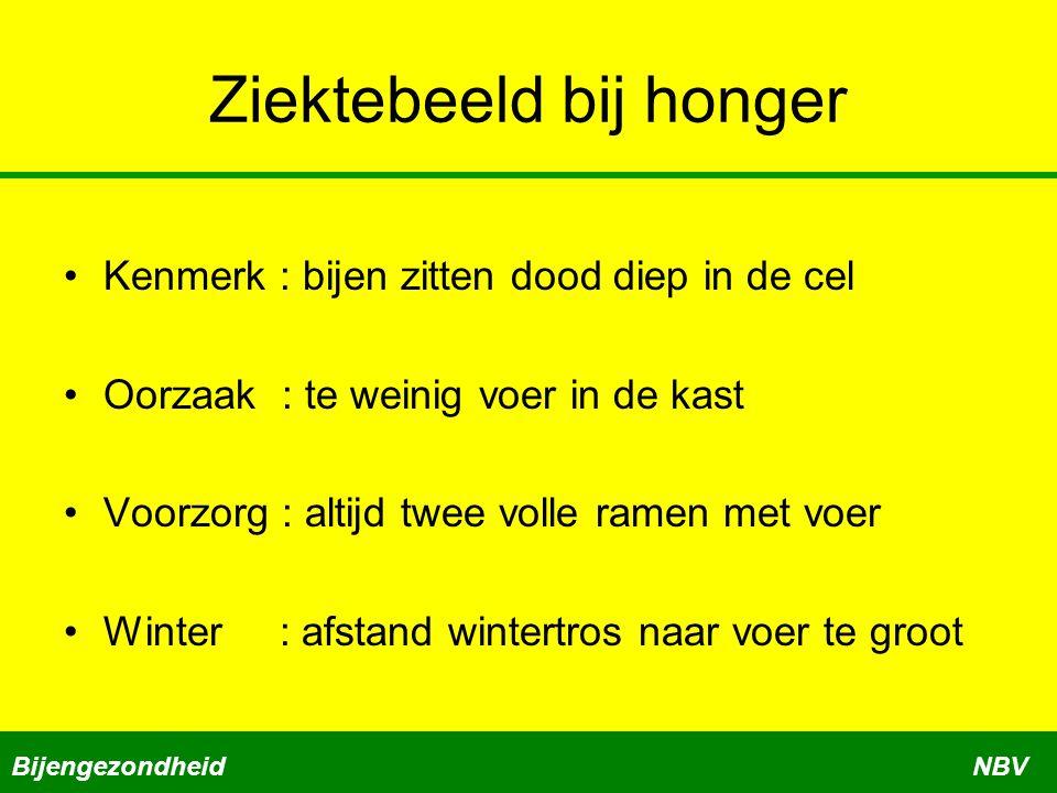 Ziektebeeld bij honger •Kenmerk : bijen zitten dood diep in de cel •Oorzaak : te weinig voer in de kast •Voorzorg : altijd twee volle ramen met voer •