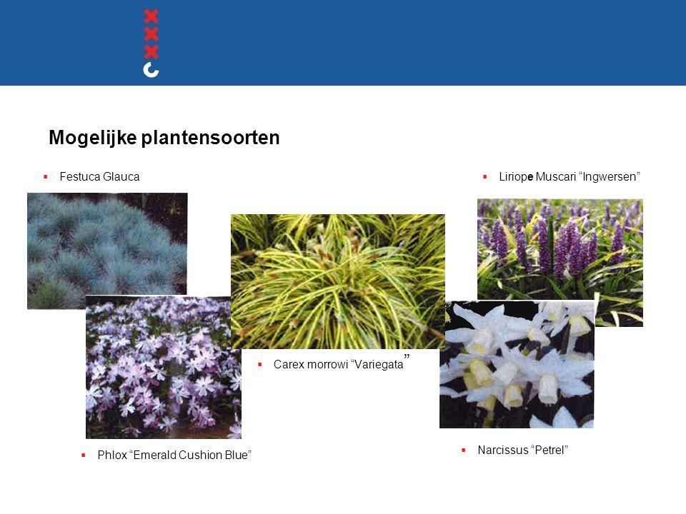 "Mogelijke plantensoorten  Festuca Glauca  Phlox ""Emerald Cushion Blue""  Liriope Muscari ""Ingwersen""  Narcissus ""Petrel""  Carex morrowi ""Variegata"