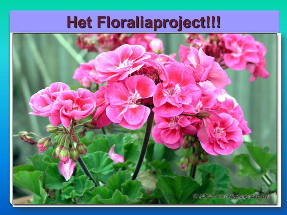 Het Floraliaproject!!! Het Floraliaproject!!!