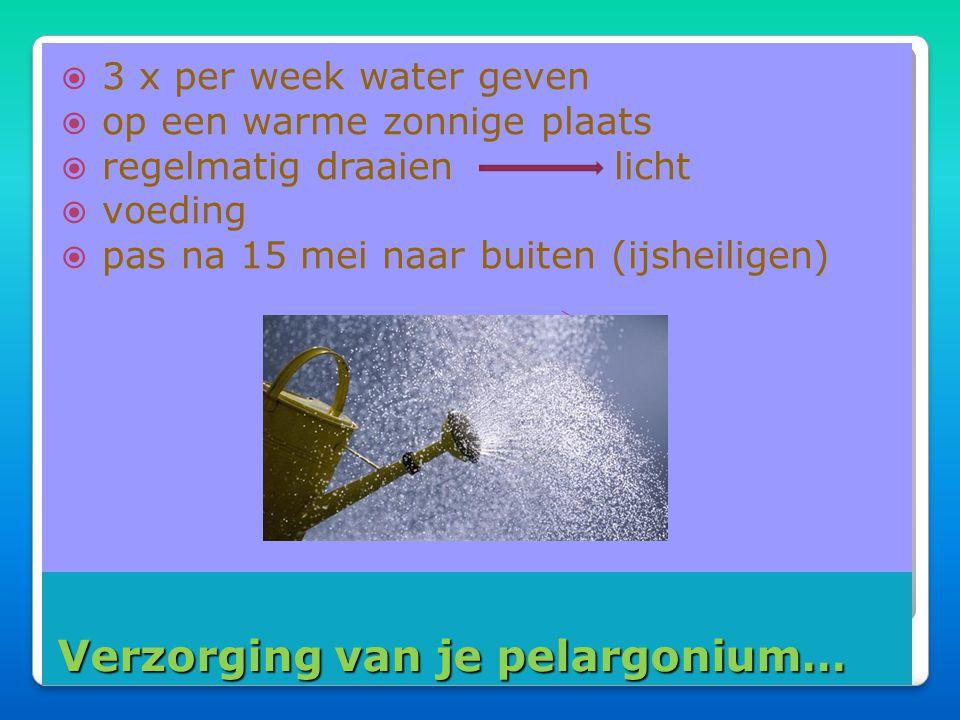 Bontbladige pelargoniums….. Bontbladige pelargoniums…..