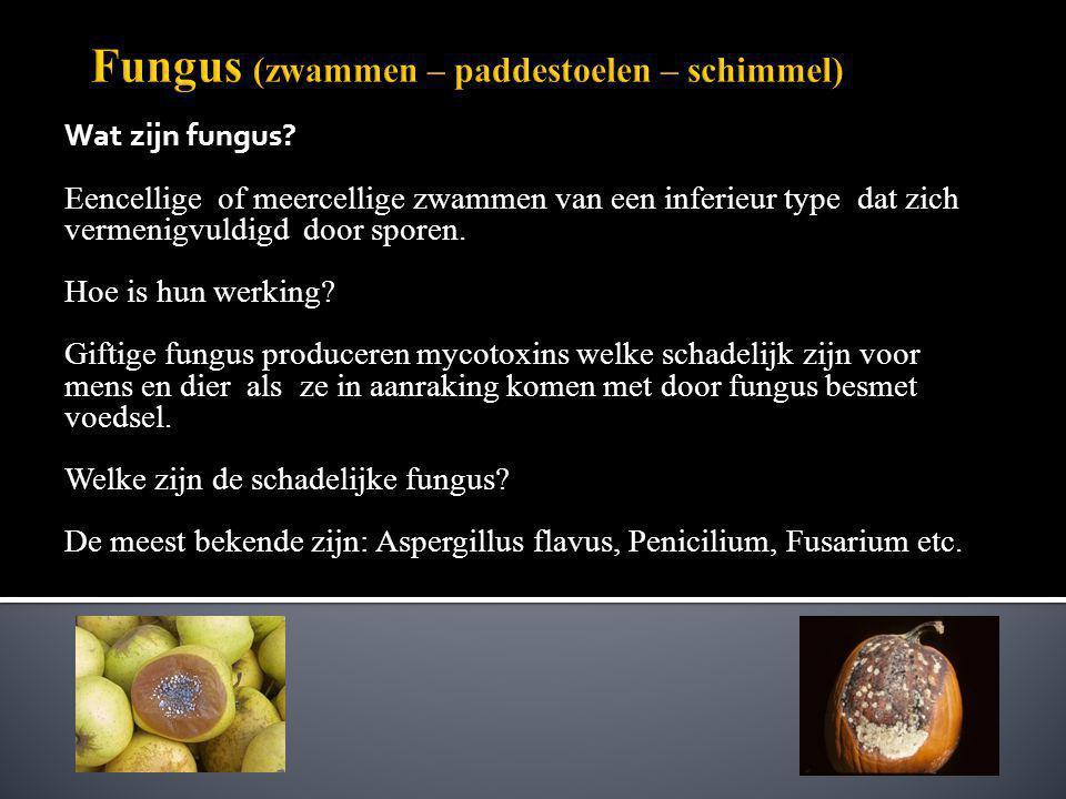 Wat zijn fungus? Eencellige of meercellige zwammen van een inferieur type dat zich vermenigvuldigd door sporen. Hoe is hun werking? Giftige fungus pro