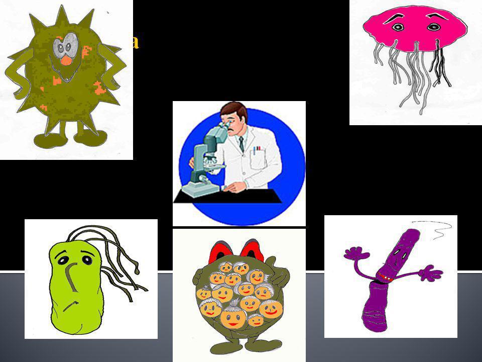 Bacteriën zijn eencellige organismen, prokaryotes, die overal voorkomen.