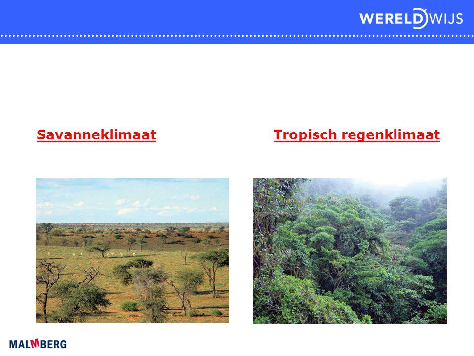 SavanneklimaatTropisch regenklimaat