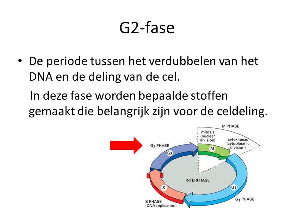 G2-fase • De periode tussen het verdubbelen van het DNA en de deling van de cel. In deze fase worden bepaalde stoffen gemaakt die belangrijk zijn voor