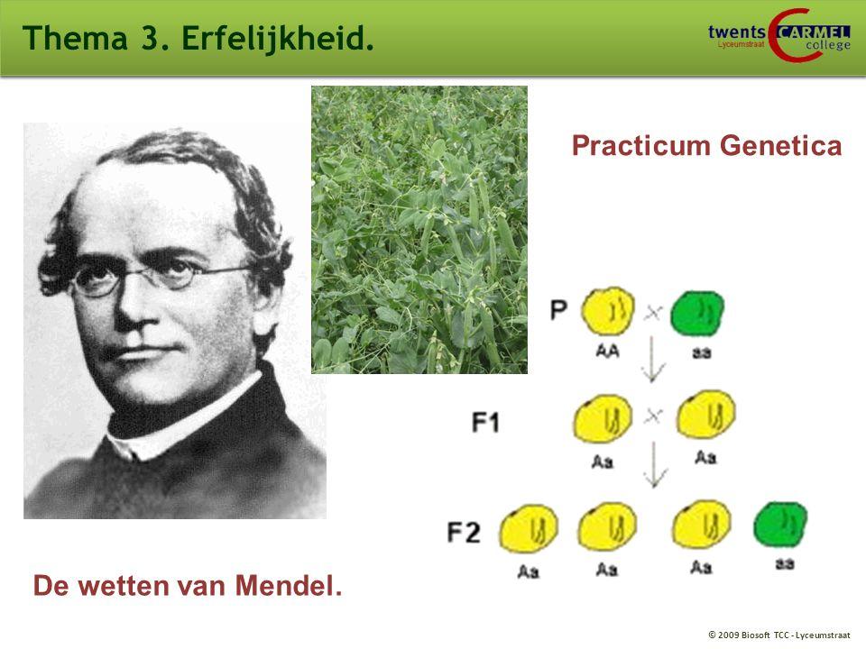 © 2009 Biosoft TCC - Lyceumstraat Thema 3. Erfelijkheid. De wetten van Mendel. Practicum Genetica