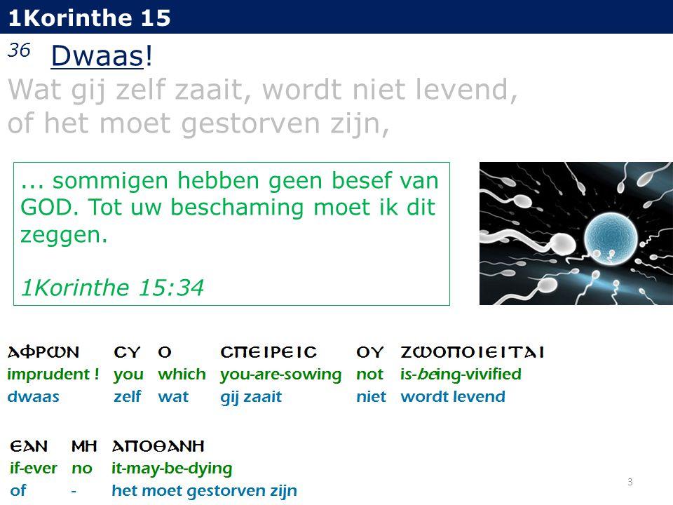 1Korinthe 15 36 Dwaas! Wat gij zelf zaait, wordt niet levend, of het moet gestorven zijn, 4