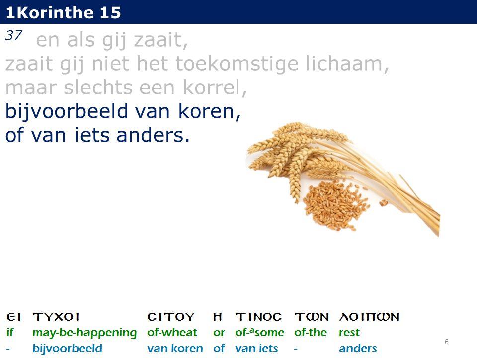1Korinthe 15 37 en als gij zaait, zaait gij niet het toekomstige lichaam, maar slechts een korrel, bijvoorbeeld van koren, of van iets anders.