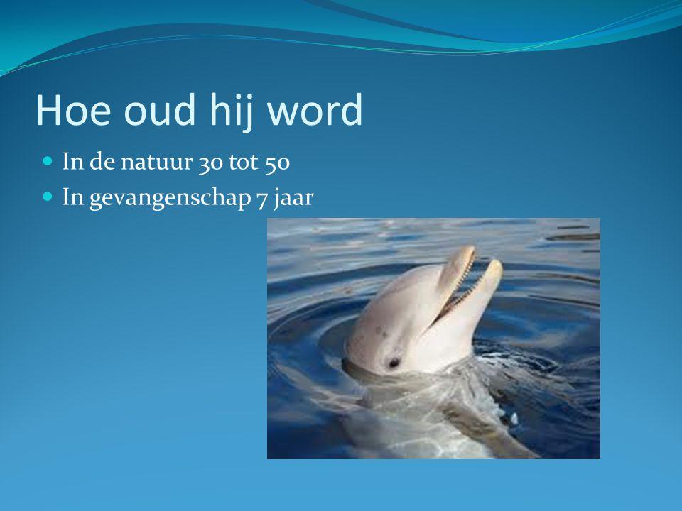 Hoe oud worden dolfijnen