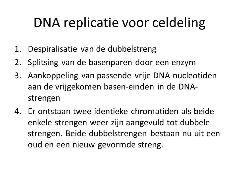 DNA replicatie voor celdeling 1.Despiralisatie van de dubbelstreng 2.Splitsing van de basenparen door een enzym 3.Aankoppeling van passende vrije DNA-nucleotiden aan de vrijgekomen basen-einden in de DNA- strengen 4.Er ontstaan twee identieke chromatiden als beide enkele strengen weer zijn aangevuld tot dubbele strengen.