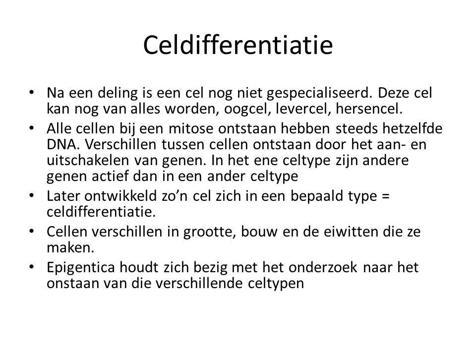 Celdifferentiatie • Na een deling is een cel nog niet gespecialiseerd.