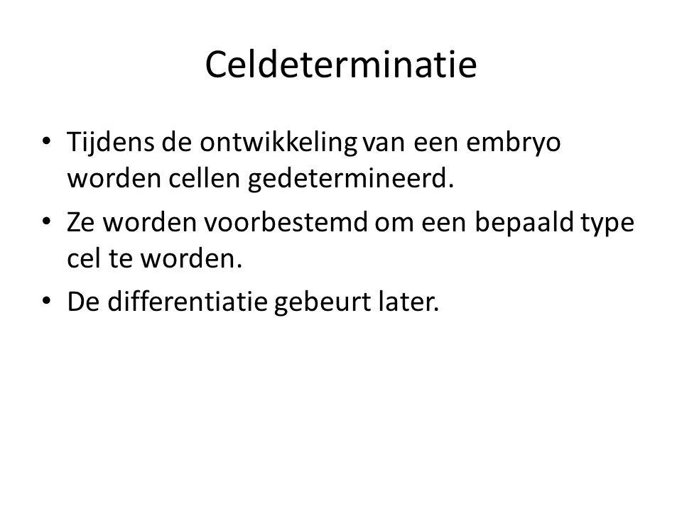Celdeterminatie • Tijdens de ontwikkeling van een embryo worden cellen gedetermineerd.