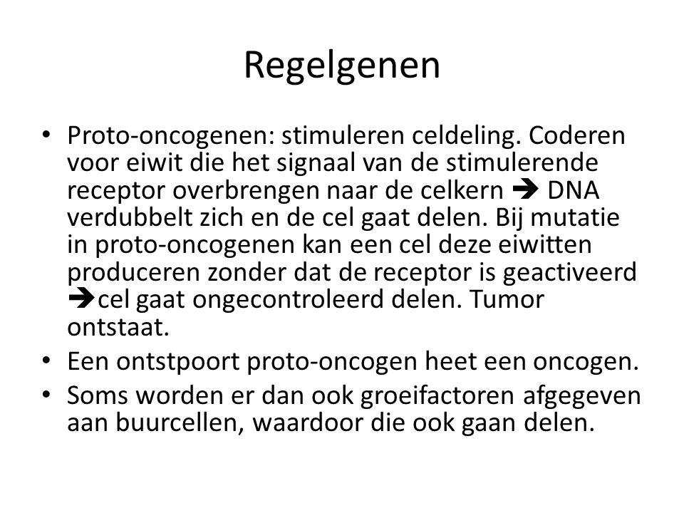 Regelgenen • Proto-oncogenen: stimuleren celdeling.
