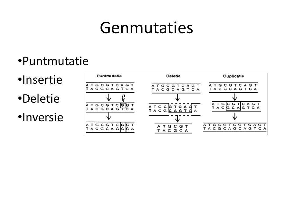 • Puntmutatie • Insertie • Deletie • Inversie Genmutaties