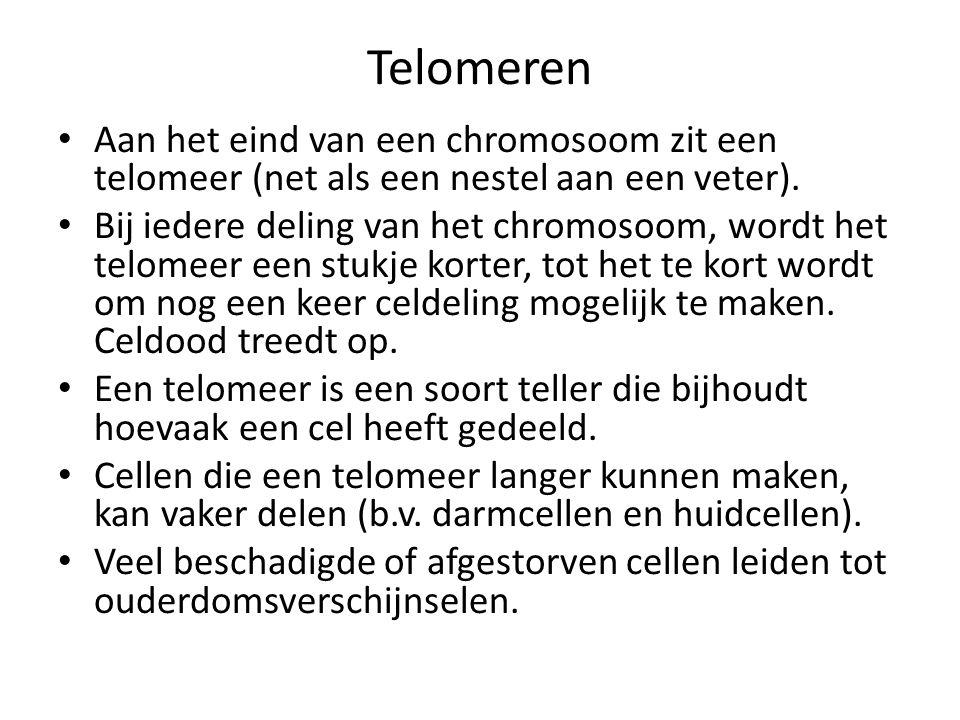 Telomeren • Aan het eind van een chromosoom zit een telomeer (net als een nestel aan een veter).