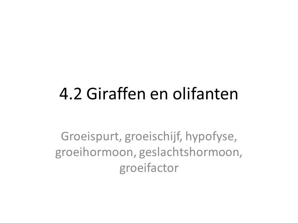 4.2 Giraffen en olifanten Groeispurt, groeischijf, hypofyse, groeihormoon, geslachtshormoon, groeifactor