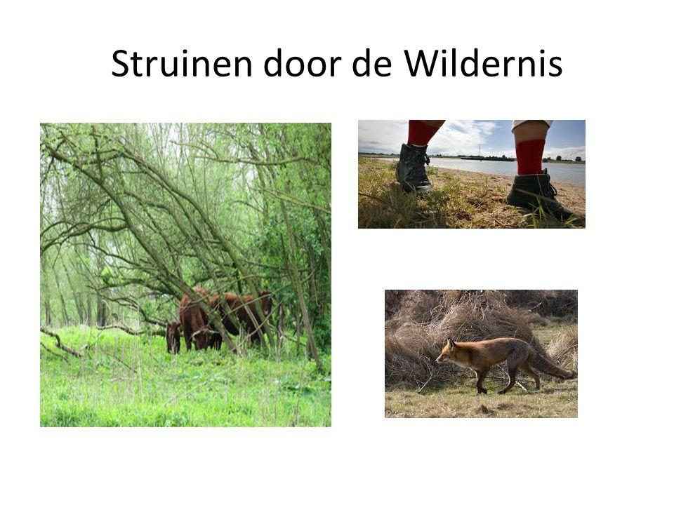 Struinen door de Wildernis