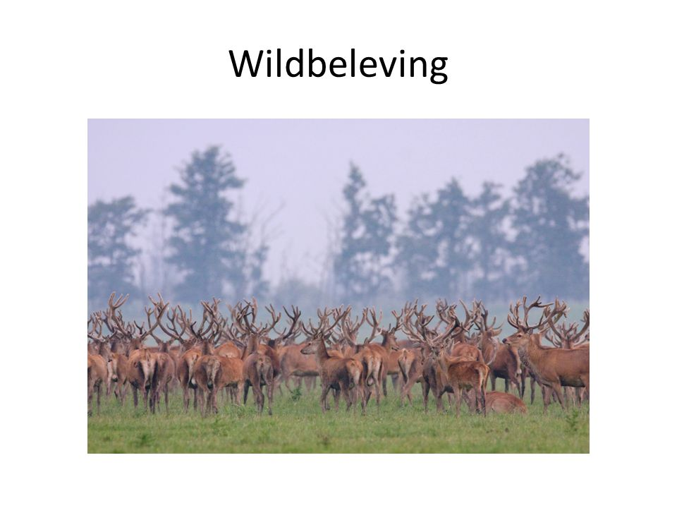 Wildbeleving