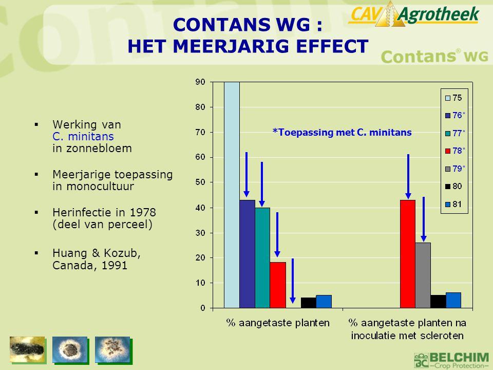 CONTANS WG : HET MEERJARIG EFFECT  Werking van C. minitans in zonnebloem  Meerjarige toepassing in monocultuur  Herinfectie in 1978 (deel van perce