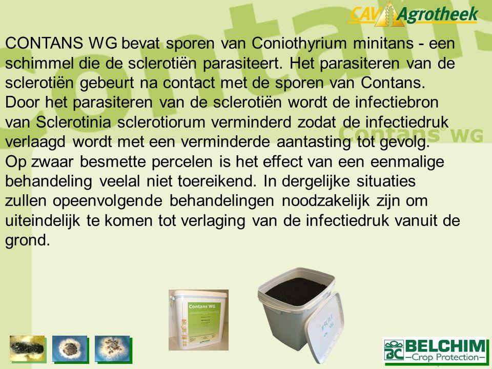 CONTANS WG bevat sporen van Coniothyrium minitans - een schimmel die de sclerotiën parasiteert. Het parasiteren van de sclerotiën gebeurt na contact m