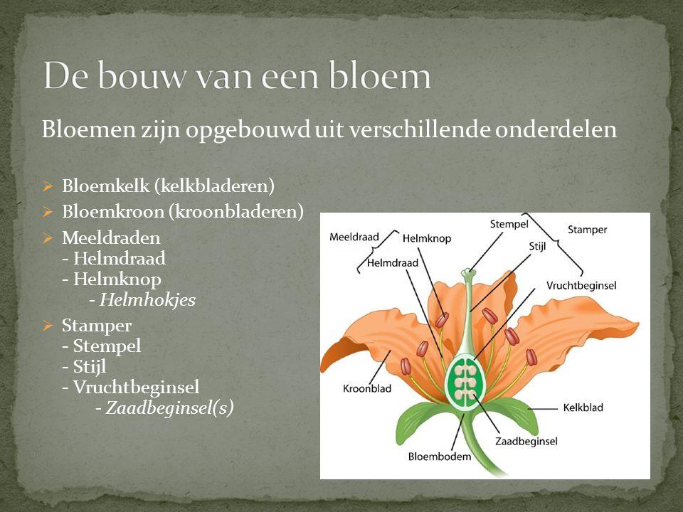 Bloemen zijn opgebouwd uit verschillende onderdelen  Bloemkelk (kelkbladeren)  Bloemkroon (kroonbladeren)  Meeldraden - Helmdraad - Helmknop - Helm