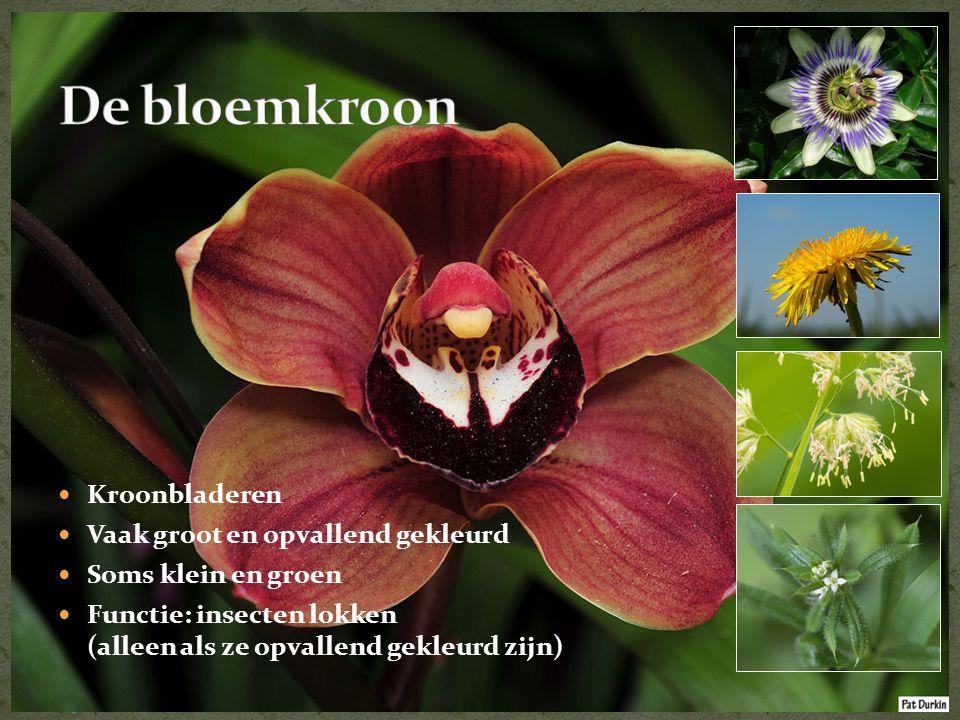  Kroonbladeren  Vaak groot en opvallend gekleurd  Soms klein en groen  Functie: insecten lokken (alleen als ze opvallend gekleurd zijn)
