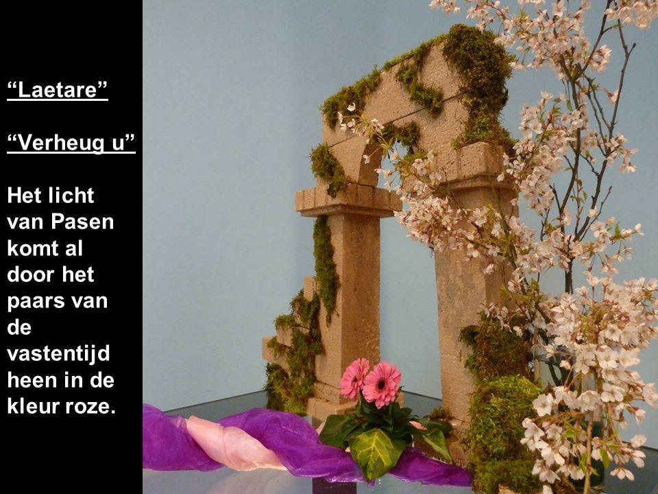 Laetare Verheug u Het licht van Pasen komt al door het paars van de vastentijd heen in de kleur roze.