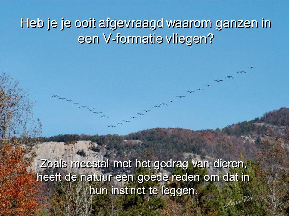 Heb je je ooit afgevraagd waarom ganzen in een V-formatie vliegen.