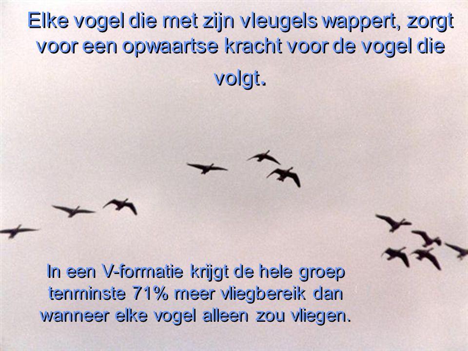 Heb je je ooit afgevraagd waarom ganzen in een V-formatie vliegen? Zoals meestal met het gedrag van dieren, heeft de natuur een goede reden om dat in