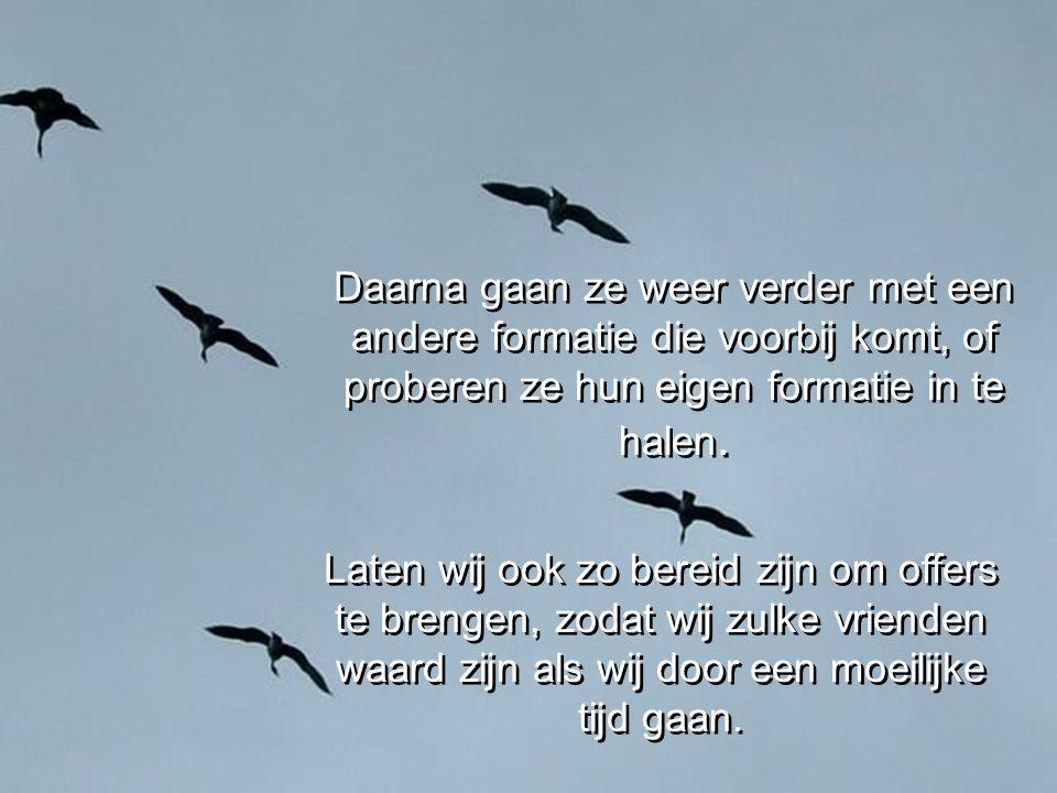 Ze blijven bij het ongezonde lid van hun groep totdat die weer vliegen kan of sterft. Als een gans ziek of gewond wordt,verlaten twee andere ganzen de