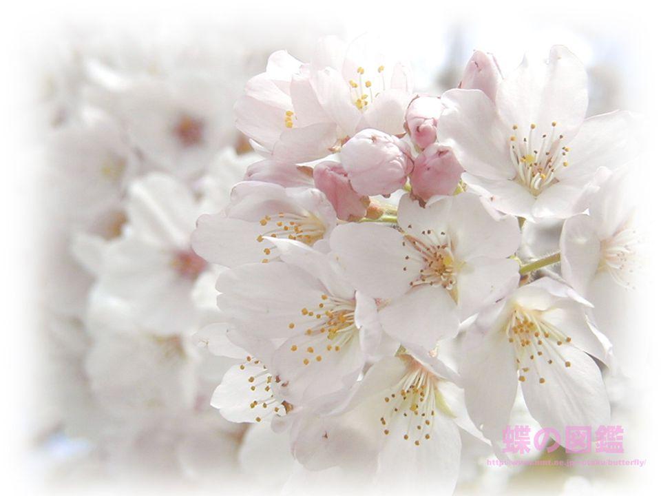 Planten en bloemen komen tot leven, dat mogen we elk jaar weer beleven!