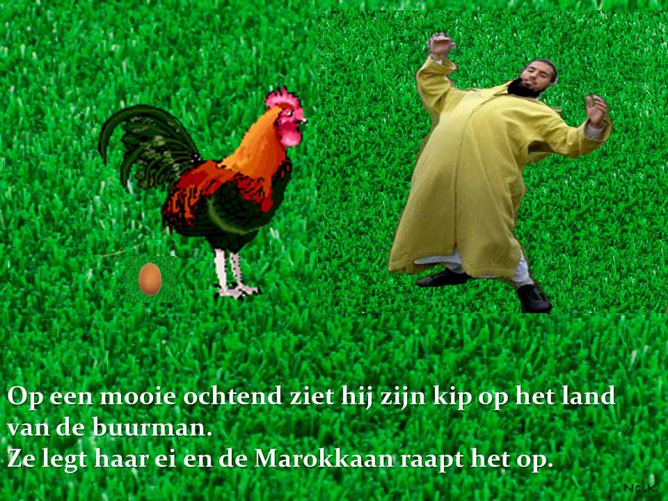 Op een mooie ochtend ziet hij zijn kip op het land van de buurman. Ze legt haar ei en de Marokkaan raapt het op. NolK