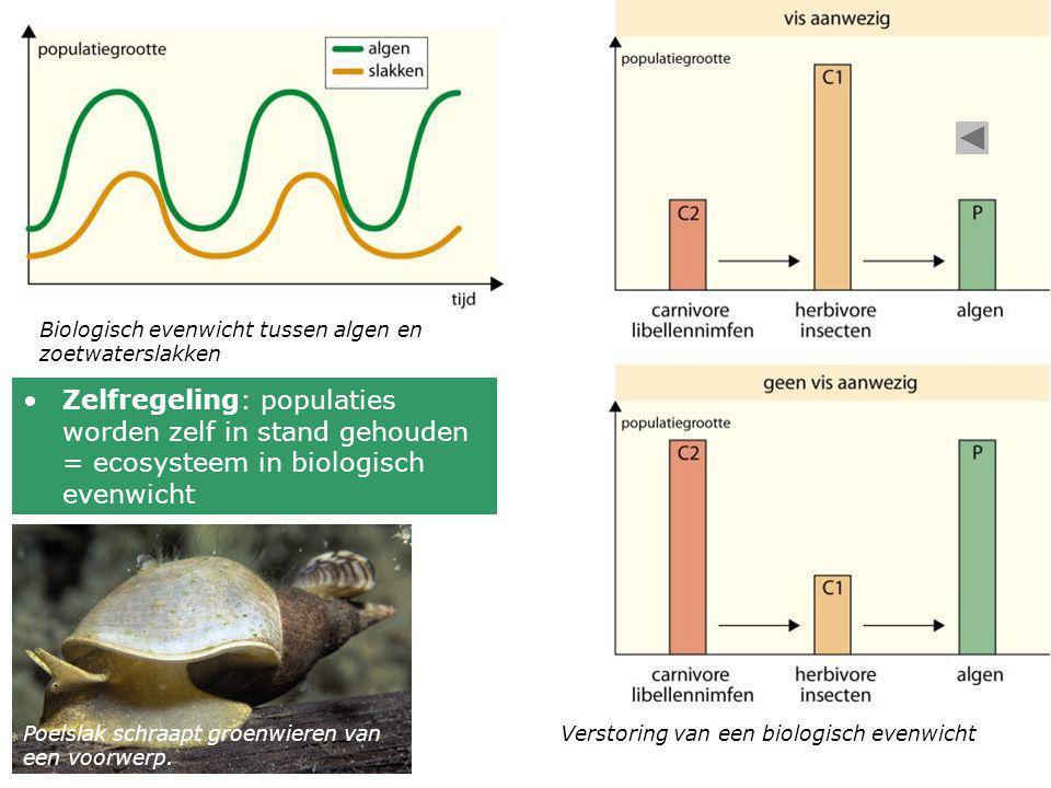 Biologisch evenwicht tussen algen en zoetwaterslakken Verstoring van een biologisch evenwicht •Zelfregeling: populaties worden zelf in stand gehouden