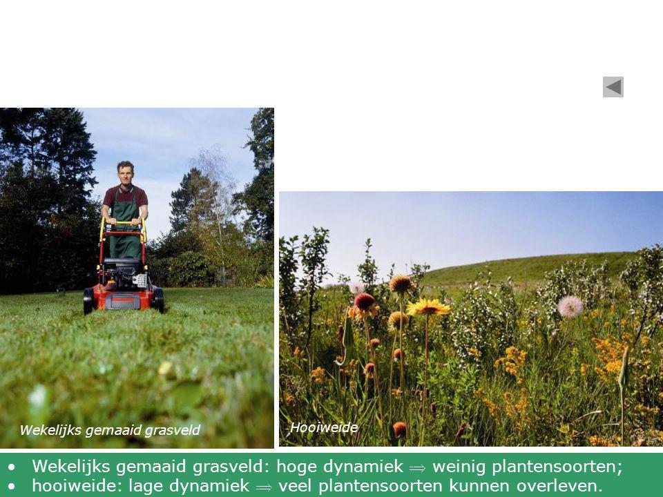 Wekelijks gemaaid grasveld Hooiweide •Wekelijks gemaaid grasveld: hoge dynamiek  weinig plantensoorten; •hooiweide: lage dynamiek  veel plantensoort