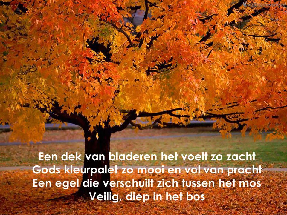 Een dek van bladeren het voelt zo zacht Gods kleurpalet zo mooi en vol van pracht Een egel die verschuilt zich tussen het mos Veilig, diep in het bos