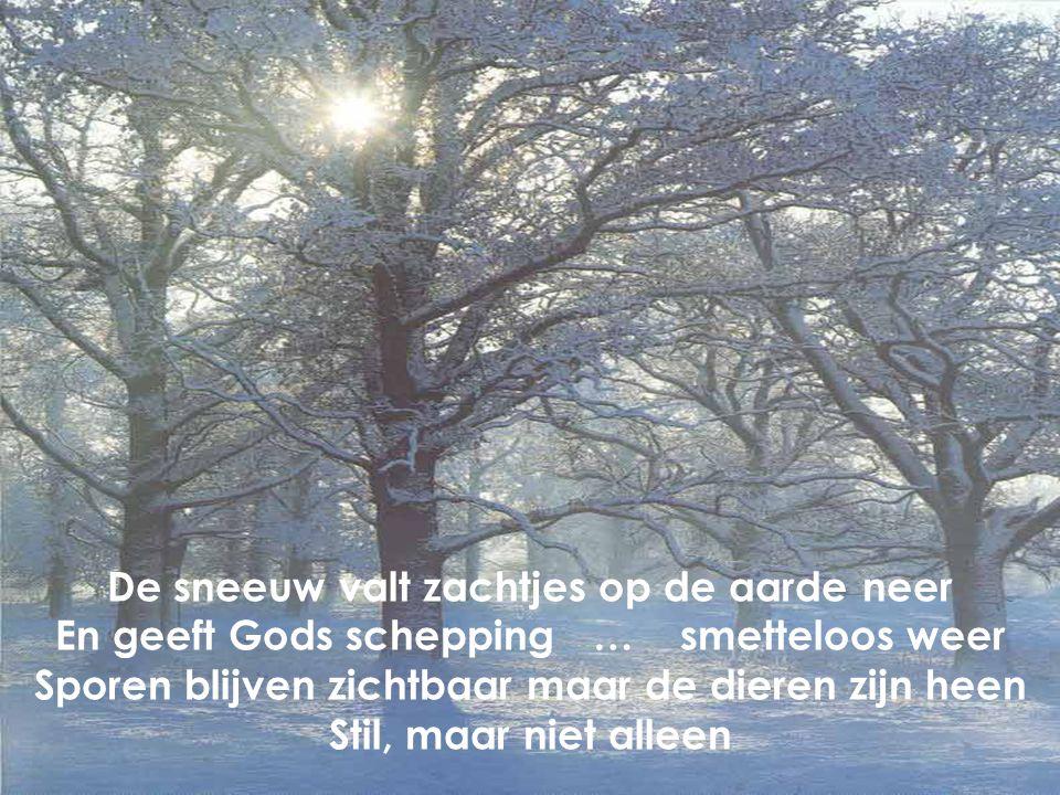 De sneeuw valt zachtjes op de aarde neer En geeft Gods schepping … smetteloos weer Sporen blijven zichtbaar maar de dieren zijn heen Stil, maar niet a
