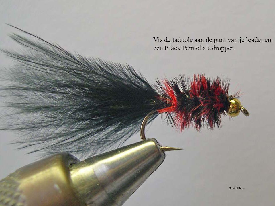 Vis de tadpole aan de punt van je leader en een Black Pennel als dropper. Suc6 Rinus