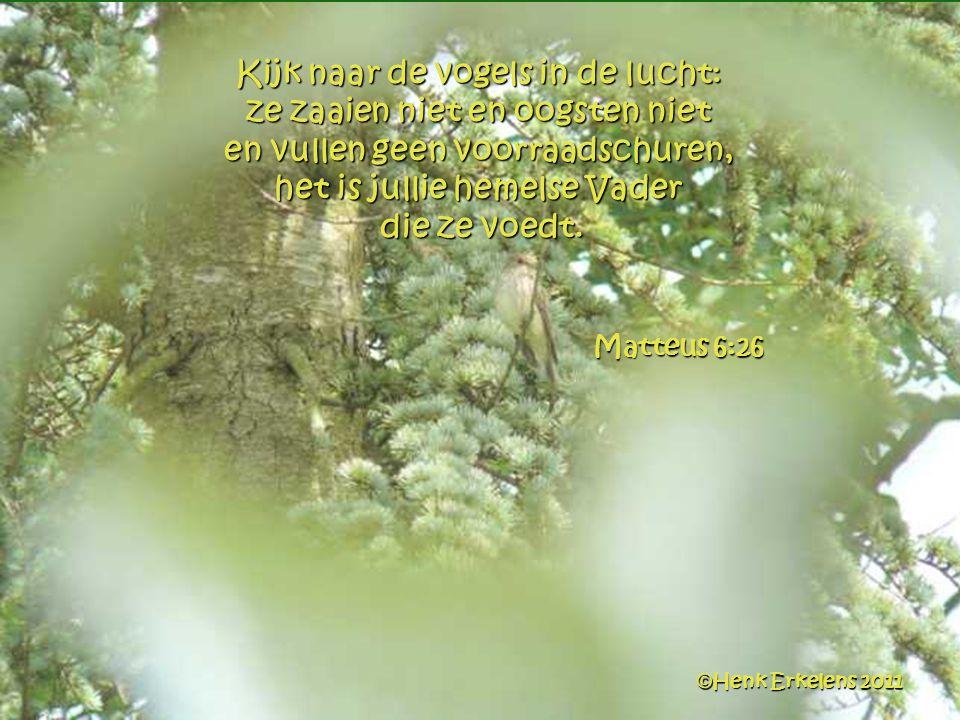 Kijk naar de vogels in de lucht: ze zaaien niet en oogsten niet en vullen geen voorraadschuren, het is jullie hemelse Vader die ze voedt.