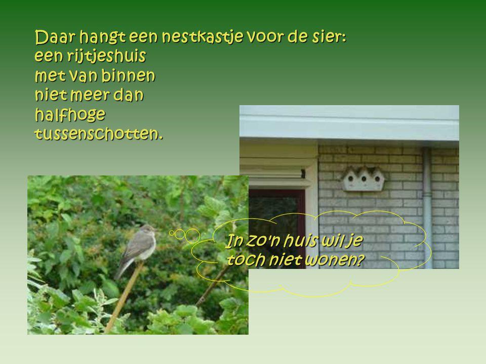 20 juli 20 juli De volgende dag is het donspak De volgende dag is het donspak zelfs al een verenpak!